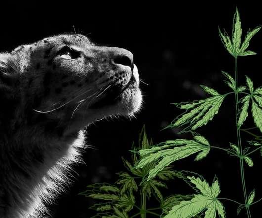 Strains - Medical Cannabis Brief